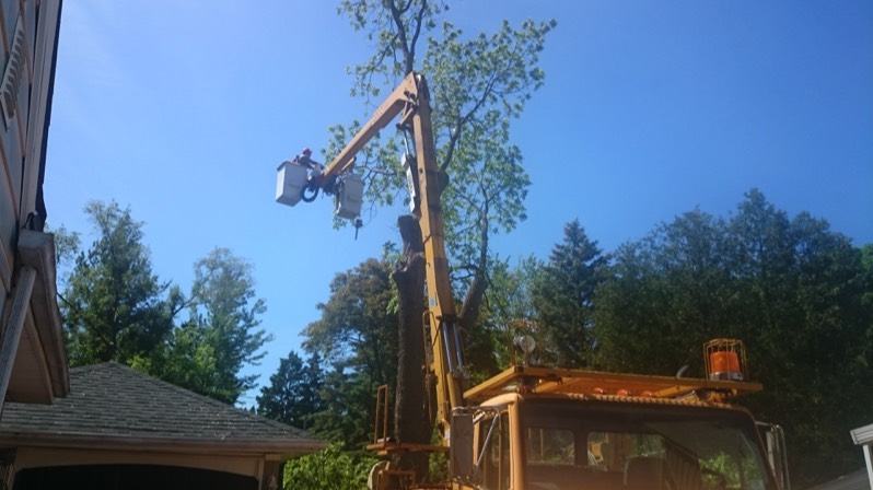 Tree And Branch Removal And Cutting Kitchener Waterloo